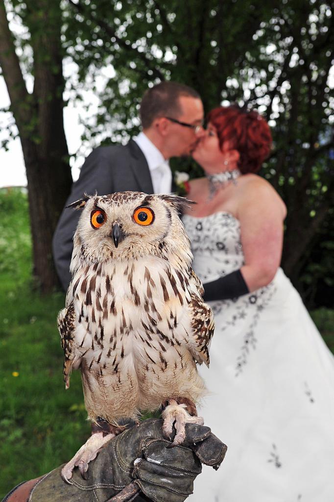 Bruiloften, vogels, vermaak
